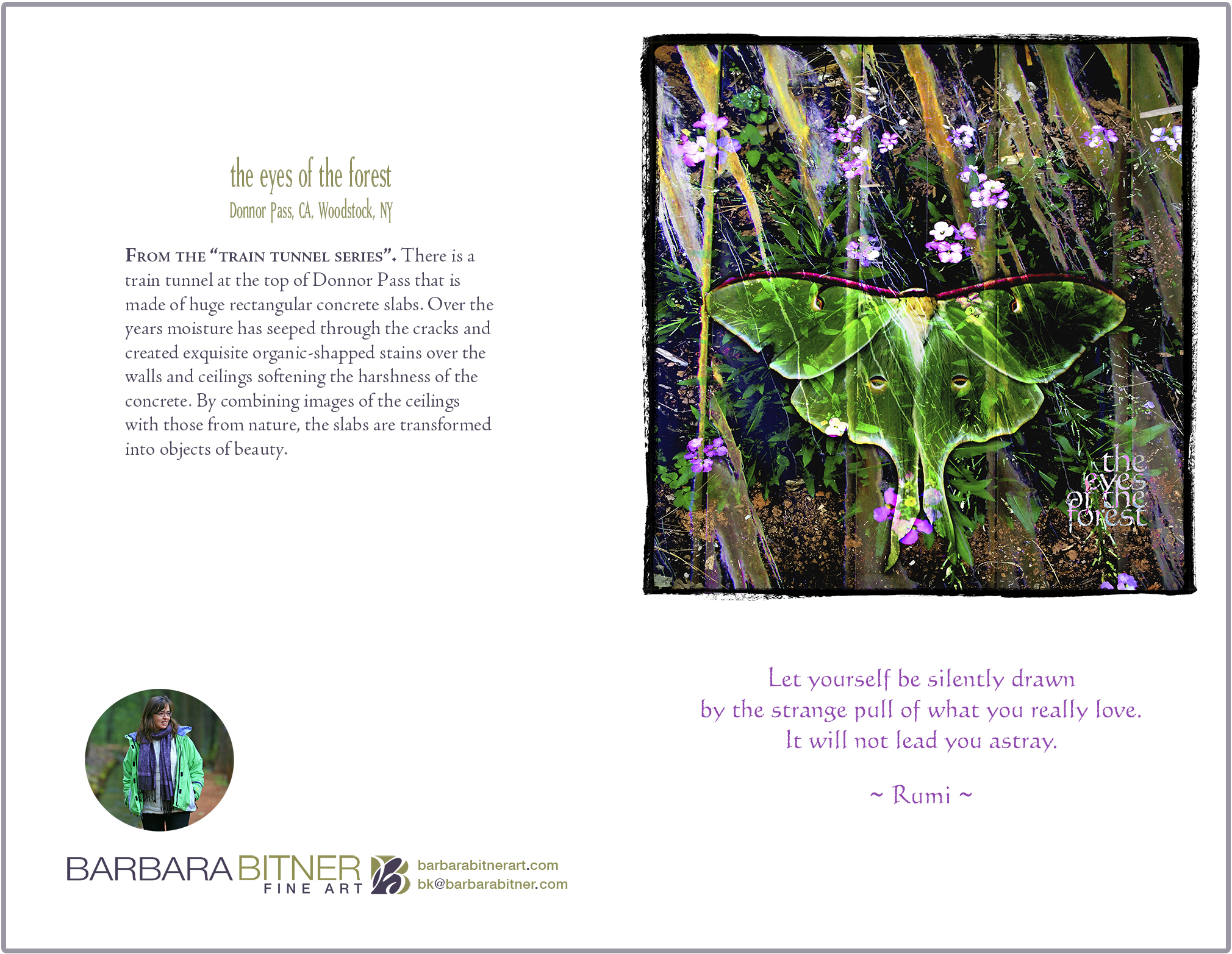 Eyes of the Forest greeting card